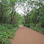 Nairobi's National Arboretum