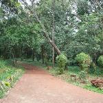 Pathway in Nairobi