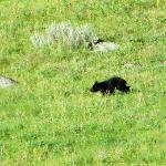 Black bear cub!!!
