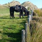 horses wait