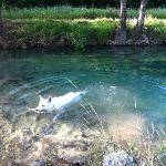 Our dog also came along and he swam in the river