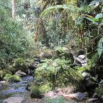 Pepe brought us here, source of Rio Blanco, in virgin cloud forest, WOW