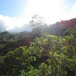 views of cloud forest on another ride