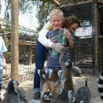 Lemurs love grapes!