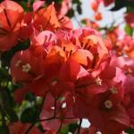 More flora...