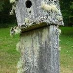 Adorable birdhouses sit atop the fence posts!!!