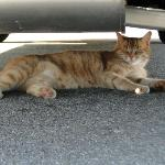 The hotel cat Jack liked the shade of our car.