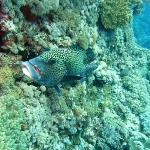 Grouper at a cleaning station