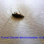 Photo of Travel Charme Strandhotel Bansin