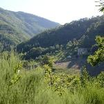 View towards the Bio Agriturismo Il Vigno from the road