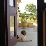Beautiful Winery Scenery