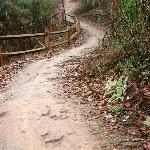 Mountain Biking Trail