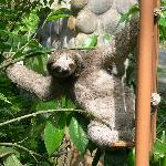 Sloth on front gate