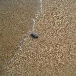 Petite tortue deviendra grande....
