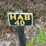 Cabin No. 40