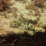 Manta diving pics