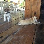 I love lounging in the restaurant area... so did these two.