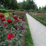バラが咲き乱れるローズガーデン