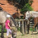 gentle horse whisperer, my daughter