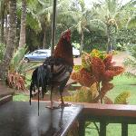 A friendly guest. ;-)