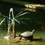 "A ""Sunbather"" in Hurricane Hotel's Aqua Pond"
