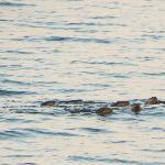 Friendly otter family