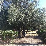 A nice hammock to relax by the olive trees