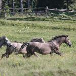 Young stallions in the mountains