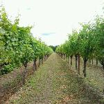 Tesoaria Vineyard & Winery Foto
