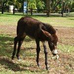 Tito the new donkey