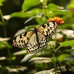 Blue Willow Butterflies & Blooms Butterfly Conservatory