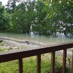 View over the mangrove from the terrace