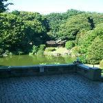View on the tea garden