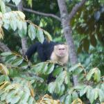 A monkey in the trees nearby