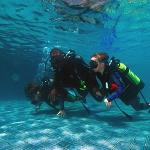 Diving - kids