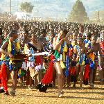The Reed dance (Every August)