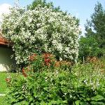 Sauleskalni garden