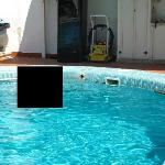 Cracked tiles and holes in swimming pool waterline