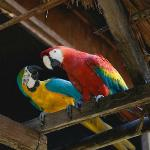The parrots around the kitchen
