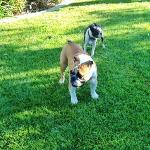 Edward and Rowdy, fun play time on the grass.