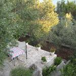 The garden with olive trees, lemon and pomegranate