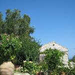 Zakspitaki garden