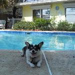 Sparcole chillin out by the pool !!!
