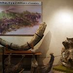 Musée de Paléontologie
