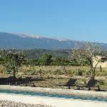 vineyards with Mont Ventoux at the back