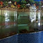 Live seafood tanks in the lobby (only half in this picture!)