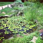 Lily pond off porch