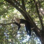 monkeys in the trees on the beach-you could feed them. They LOVE pancakes!!