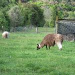 Foto de Old Macdonalds Farm and Holiday Park