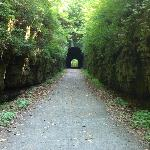 Tunnel at Tunnel Hill State Trail (10 miles from Cedar Rock Cabins)
